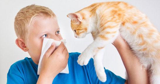 kedi alerjisi, kedi alerjisi nedir, kedi alerjisi nasıl geçer