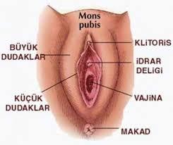 vajina estetiği ameliyatı, vajina estetiği yapımı, vajina estetiği nedir
